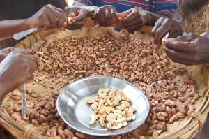 Haitian cashews