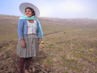 Elizabhet Trujillo of the community of Totorani harvests drought resistant maca