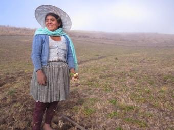 Elizabhet Trujillo of the community of Totorani harvests drought resistant maca