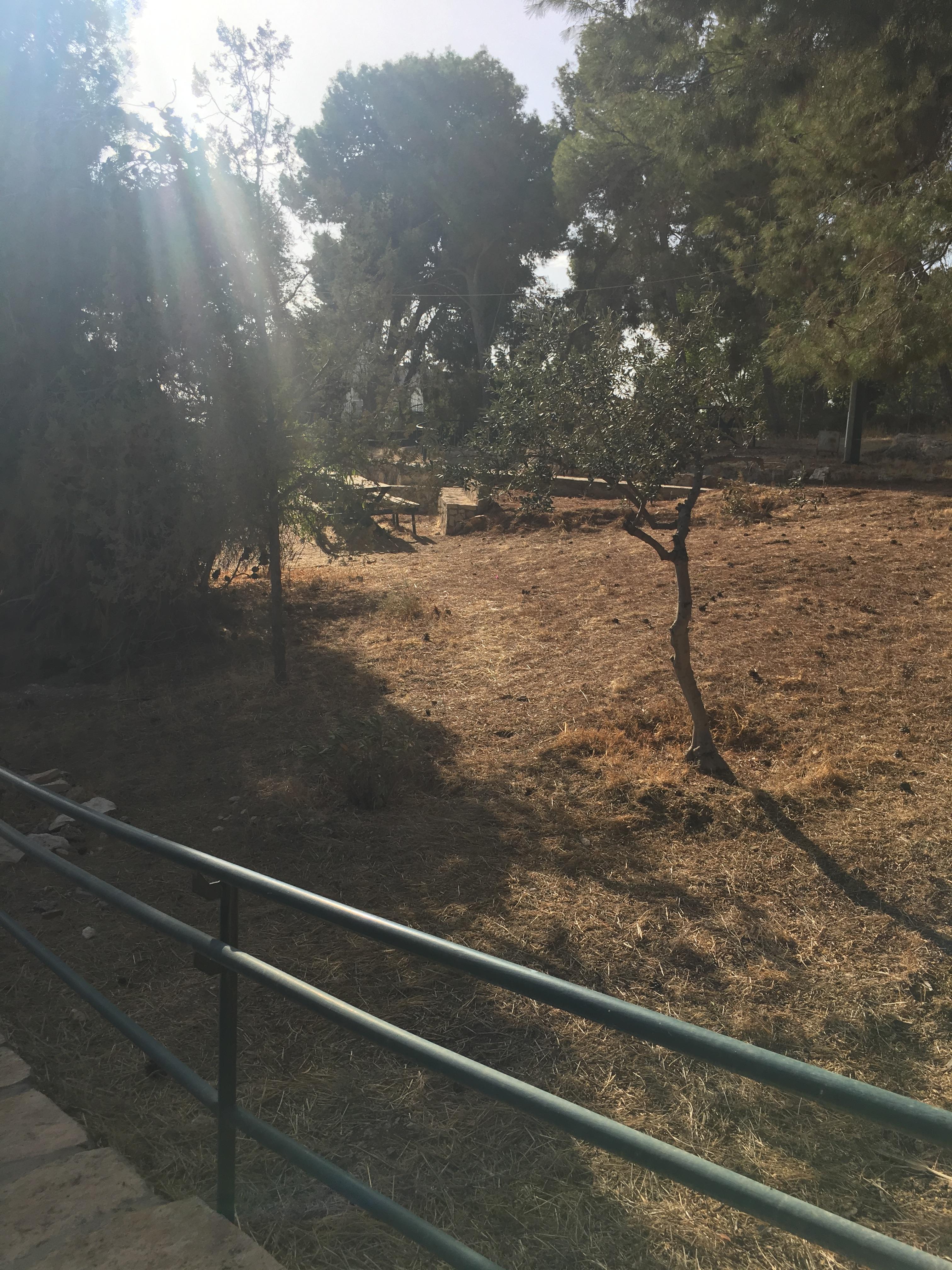 Photo of Shepherd's field